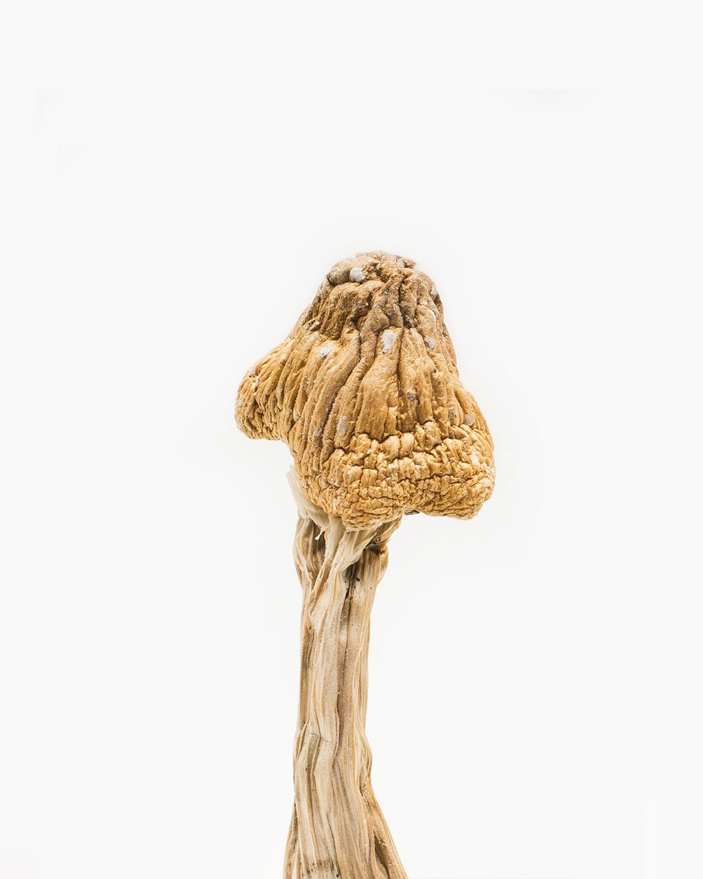 Tri-coloured Ecuadorian Mushrooms