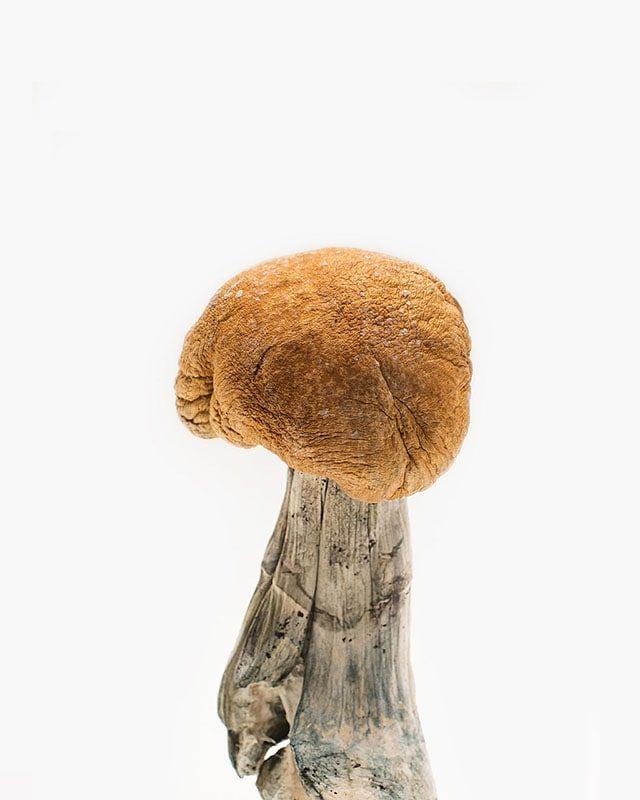 Vietnamese Mushrooms