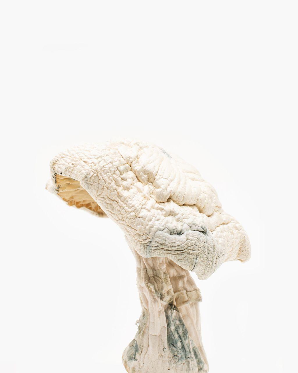 Avery's Albino Mushrooms