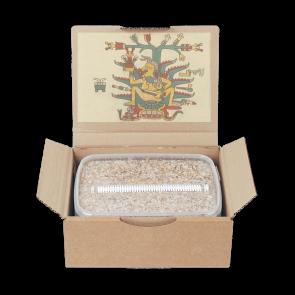 Magic Mushroom Grow Kit Mazatapec by Mondo®