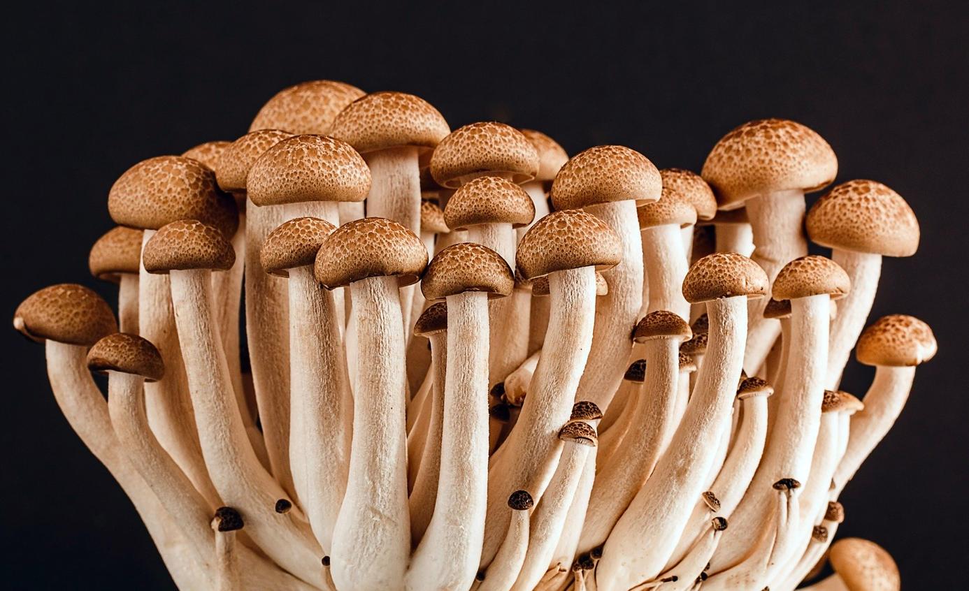 Magic Mushroom Shop
